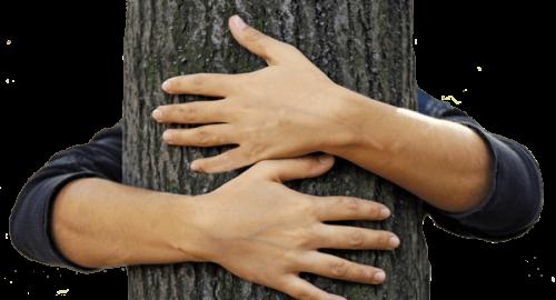 objemanje-dreves
